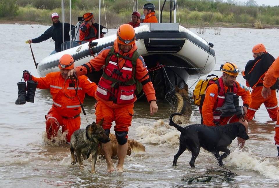 Bomberos pampeanos van a conformar la primera brigada de perros