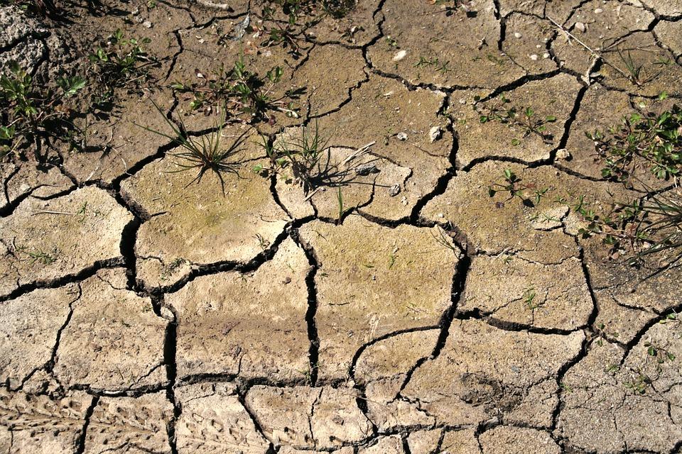 INTA: hay 6 millones de hectáreas afectadas por la sequía en la provincia